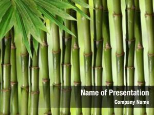 Plant bamboo green stems slight