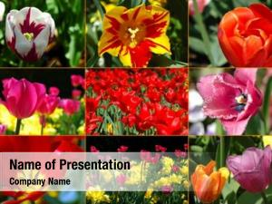 Diversity tulips montage natural world