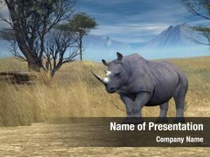 Savanna black rhino