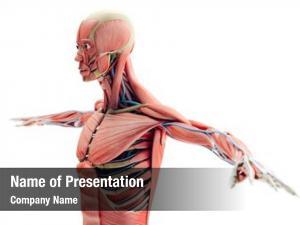 Anatomy man render, showing skeleton