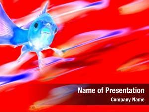 School gold fish fish motion