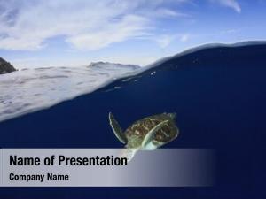 Over sea turtle under split