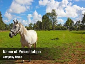 Grazing white horse green lawn