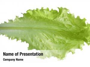 Lettuce fresh green white