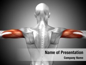 Tric concept conceptual human anatomy