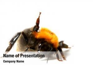 Bumble dance aerobic bee
