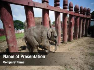 Royal thailand ayutthaya elephant camp