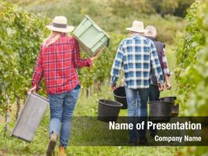 Seasonal harvest workers workers harvesting