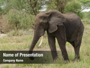 National park elephant closeup african