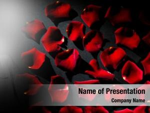 Valentine rose composition red
