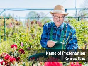 Selecting senior gardener potted tree