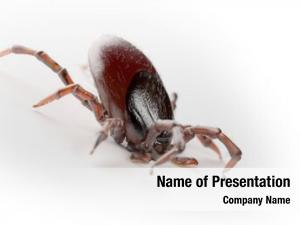 3d rendered of a tick