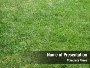 Field beautifully cut summer grass