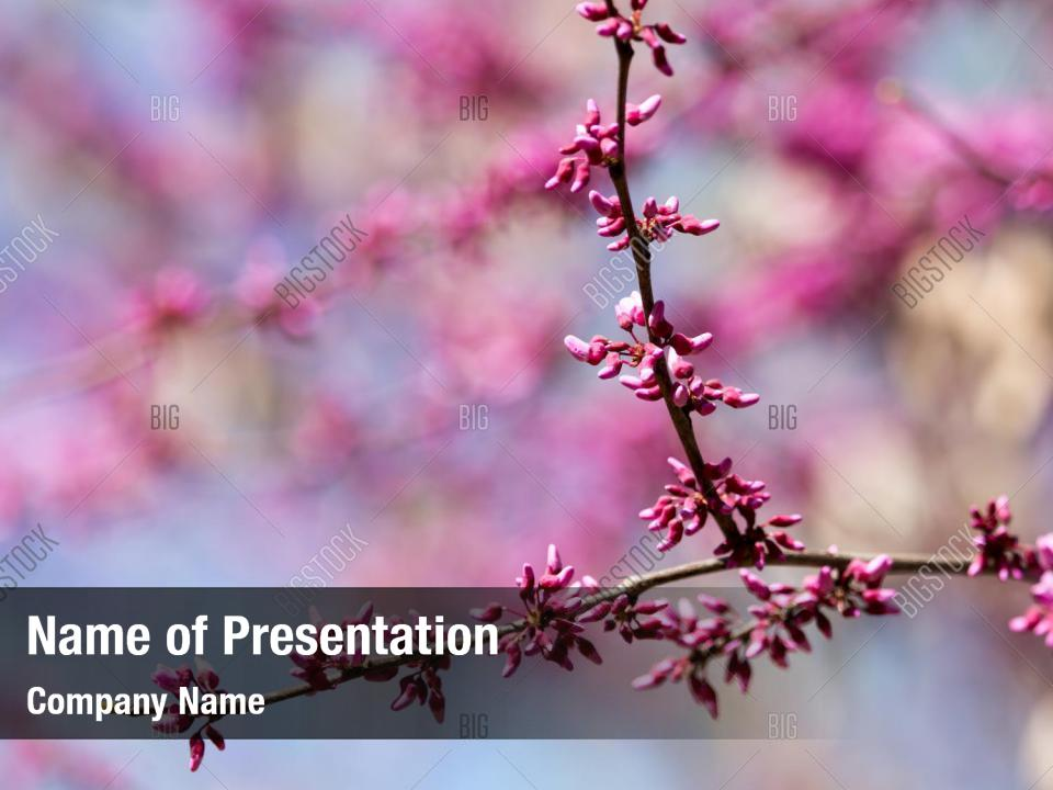 Tree Red Flowers Nature Powerpoint Template Tree Red
