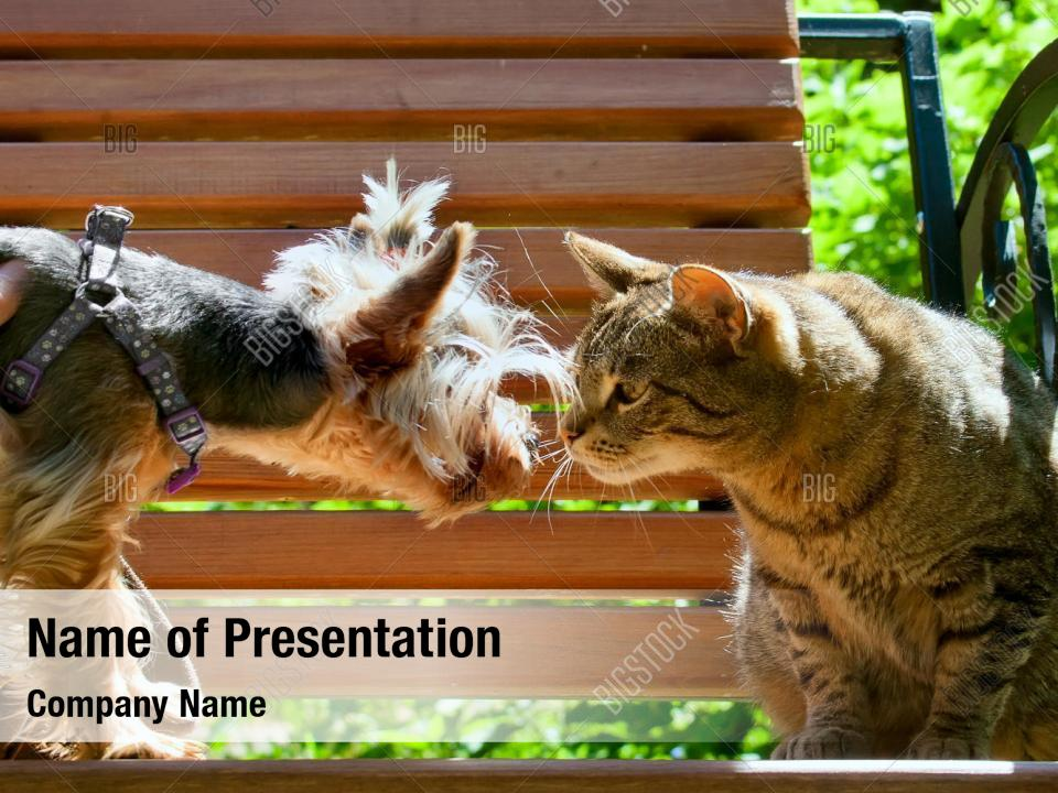 Cat And Dog Powerpoint Background Powerpoint Template Cat