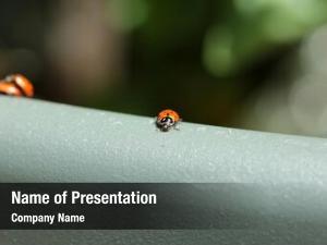 Bugs beautiful lady