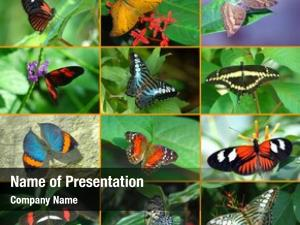 Showing butterfly montage diversity butterfly