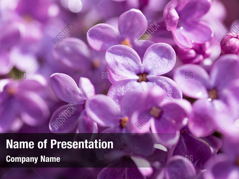 Nature Flowers Beautiful Lilac Powerpoint Template Nature