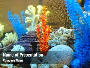 Inside colorful plants decorative aquarium