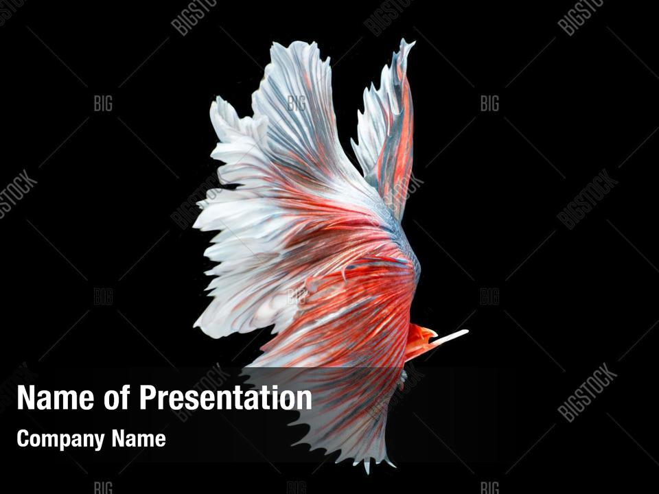 Capture The Moving Powerpoint Background Powerpoint Template