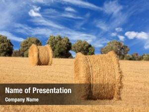 Rolls landscape hay farming field