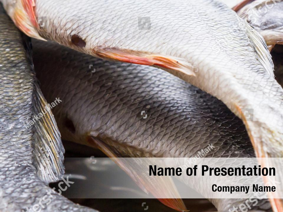 Dried Fish Perch Powerpoint Template Dried Fish Perch Powerpoint Background