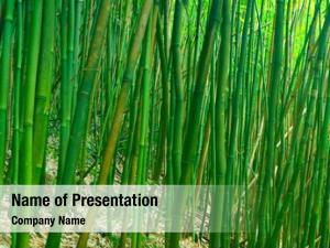 Tropical lush green asian zen
