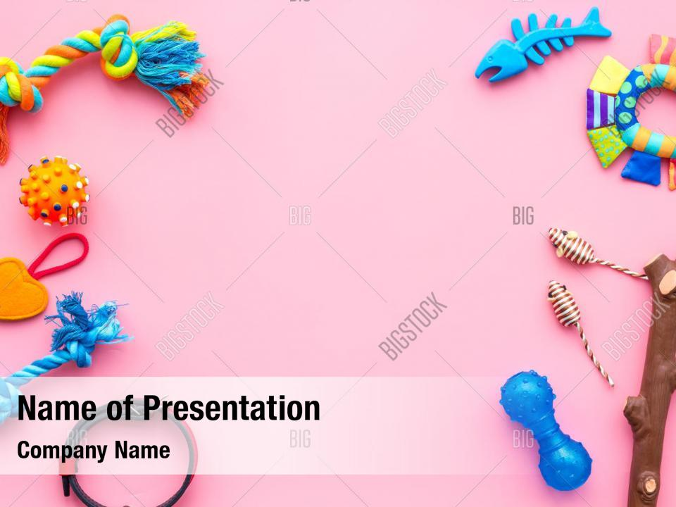 Dog Toys Cat Near Collar Powerpoint Template Dog Toys Cat