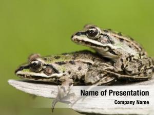 Breeding frogs