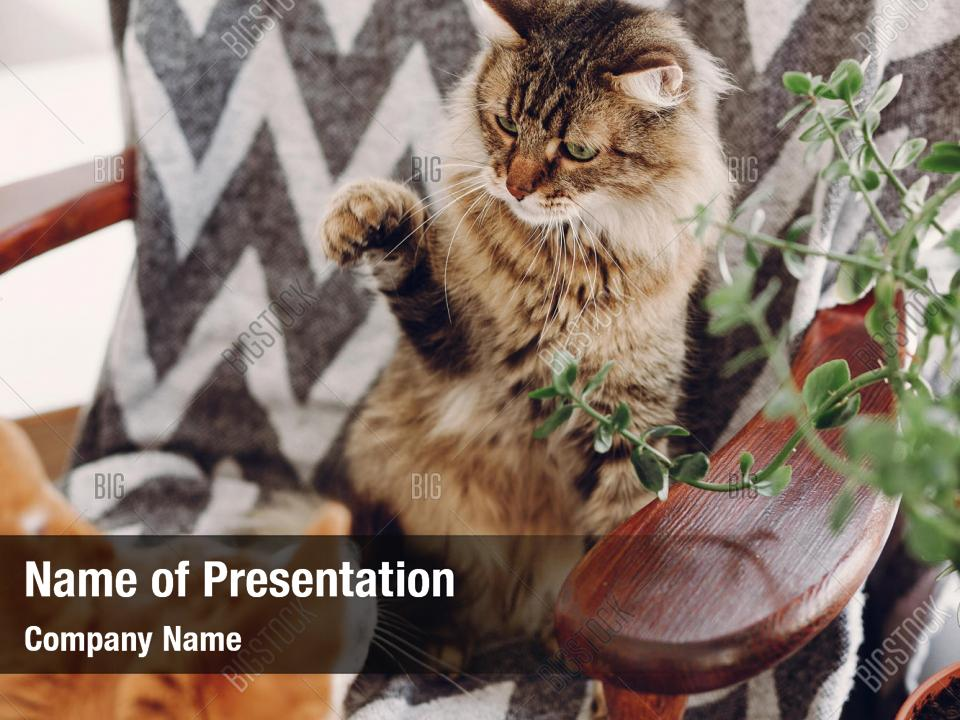 Friendship Cute Cat And Dog Powerpoint Template Friendship