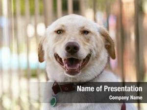 Camera dog smiling outside one